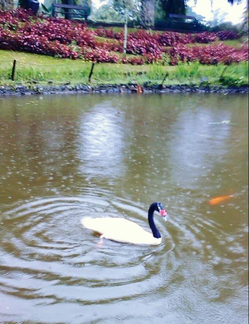 Mntsdcardpicsaypro353_duck_fis
